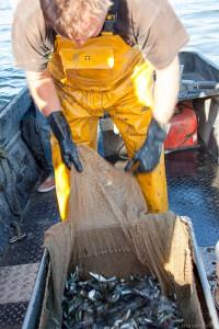 Visser leegt zijn netten in bootje