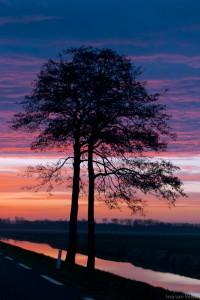 Opkomende zon Jaagweg Avenhorn met boom in het middeen